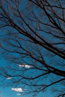 風に揺れる木