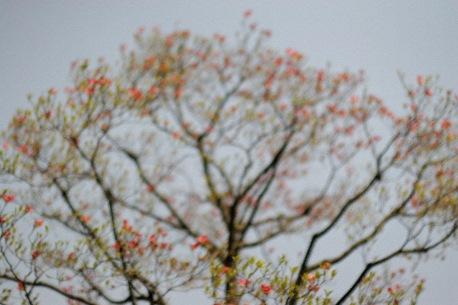 赤い小さな花